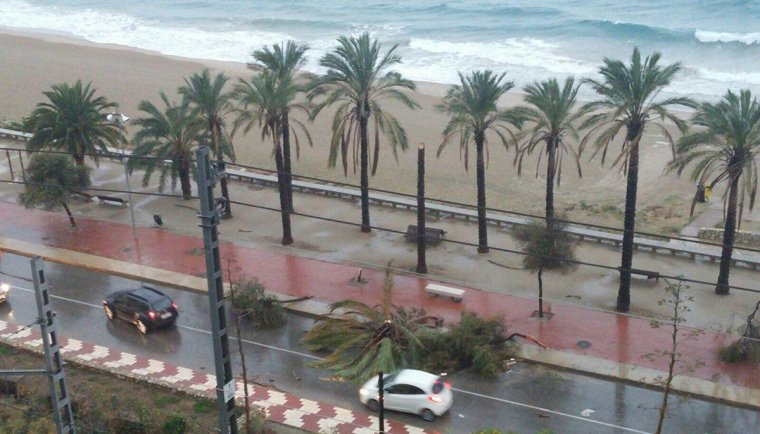 El passeig del Miracle, amb arbres i palmeres caigues pel fort vent.