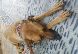 La gossa, que duu un collar amb el nom de 'Boca', podrà ser adoptada per una nova família d'aquí a vint dies.