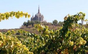Les vinyes de la DO Tarragona estan repartides per tot el territori.