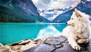 Al igual que los humanos, un perro bien alimentado será un perro más sano y vivo.