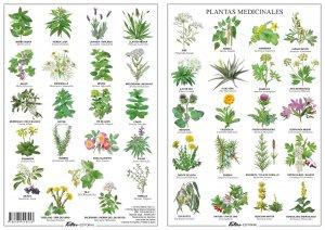 Te traemos una interesante selección de plantas medicinales y sus usos más extendidos.