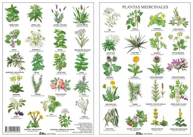 Las 15 mejores plantas medicinales usos y efectos naturales for Tipos de hierbas medicinales
