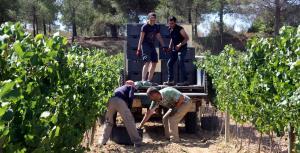 treballadors pujant caixes de raïm a un tractor.