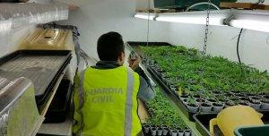 Una de les plantacions 'indoor' trobades a Segur de Calafell.