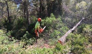 Els treballs per fer una franja contra incendis forestals a Calafell Parc ja han començat.