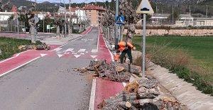 Els arbres estaven a l'avinguda del Baix Penedès.
