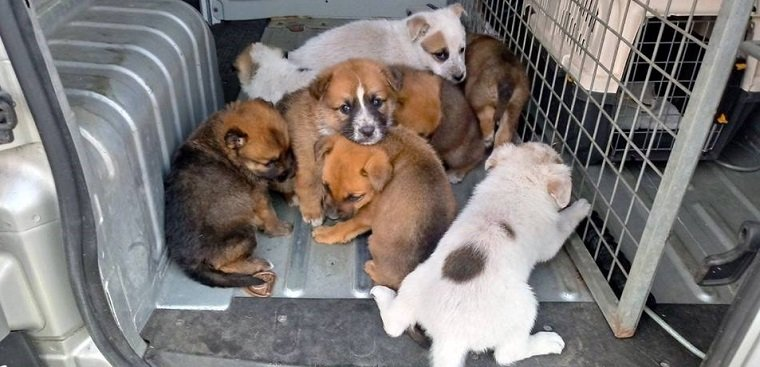 Els vuit cadells de gos recollits al carrer a Calafell.