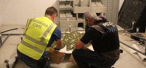 Policia local i Guàrdia Civil han desmantellat la plantació a Segur.