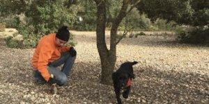 Trucap s'encarrega de la recol·lecció de tòfones al Baix Penedès.