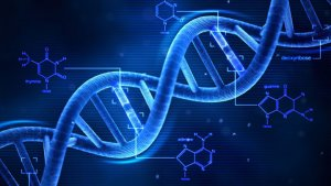Los aminoácidos son los componente fundamentales de las proteínas.