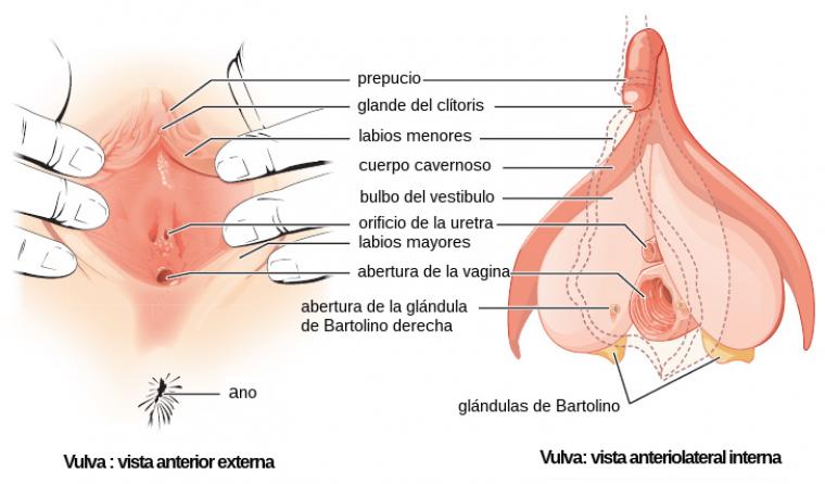 bartolinitis sintomas causas