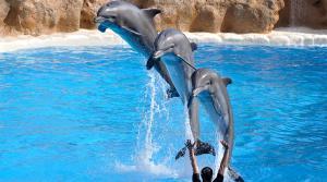 Imatge d'un espectacle en un delfinari.