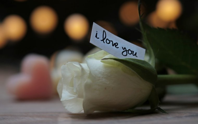 A white rose with a written note that says: I LOVE YOU