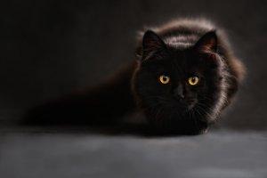 ¿Los gatos negros dan mala suerte?