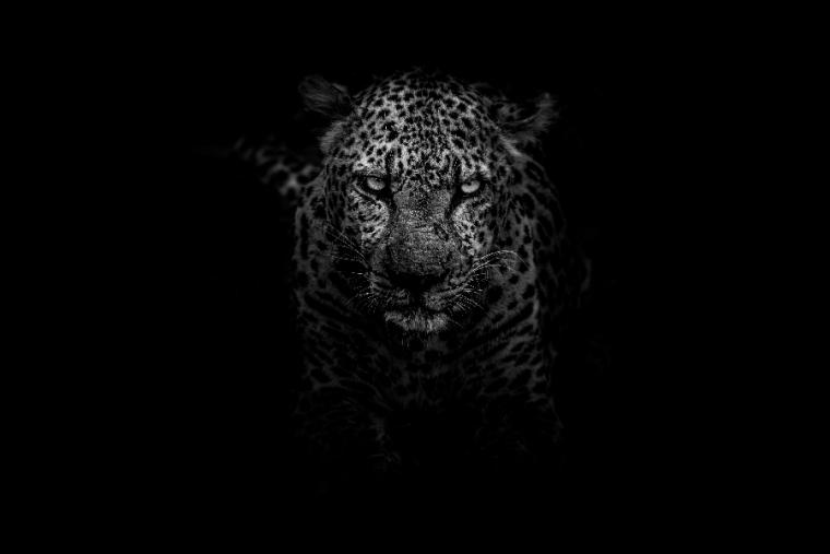 Descubre cuáles son tus animales de poder y como pueden guiarte por el camino de la vida