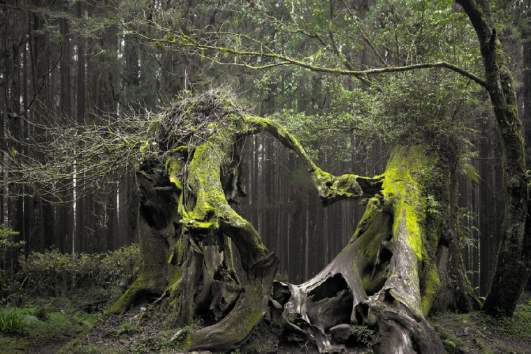 El bosque rumano de Hoia-Baciu es uno de los más espeluznantes del mundo