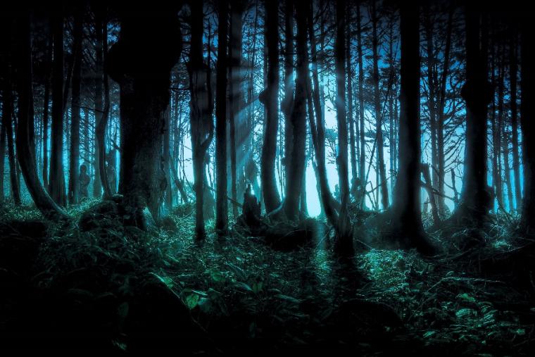 Estos son los bosques más espeluznantes en los que nunca te atreverías a perderte