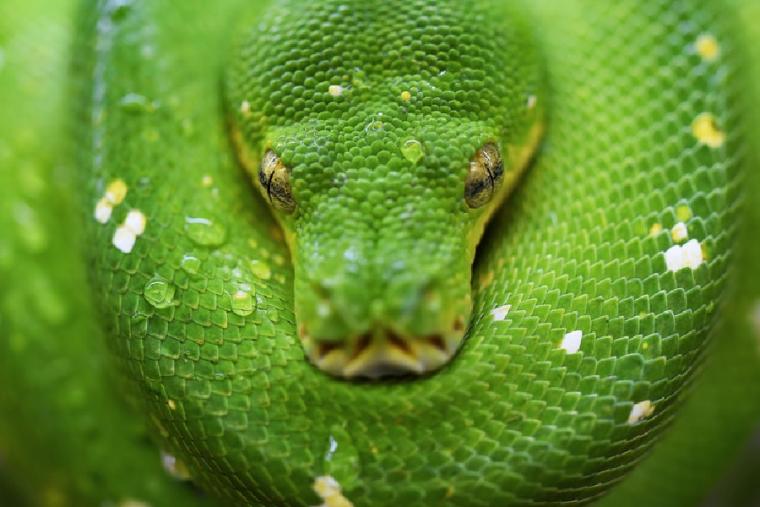 La serpiente es uno de los animales de poder más poderosos