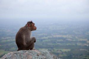 El Mono en el horóscopo chino es un ser curioso, travieso y muy inteligente