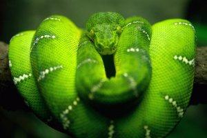 La Serpiente en el Horóscopo chino es poseedora de creatividad, sabiduría, astucia y lógica