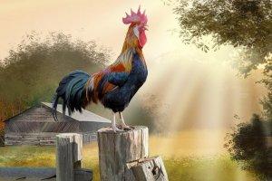 Los nacidos bajo el signo del Gallo son alegres, excéntricos y perfeccionistas