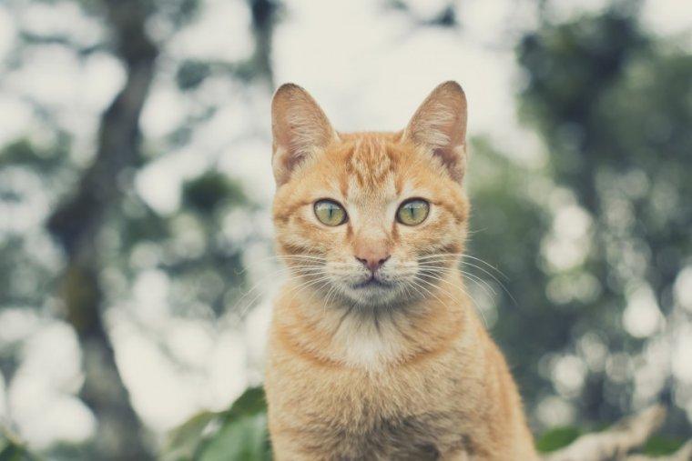 El Gato en el horóscopo chino atesora cualidades exclusivas: es un ser refinado y culto