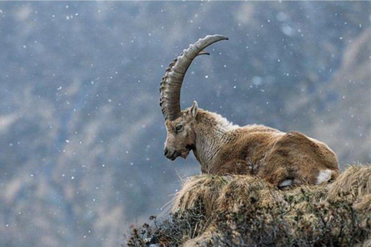 Los nacidos bajo el signo de la Cabra son honestos y reservos, creativos y soñadores