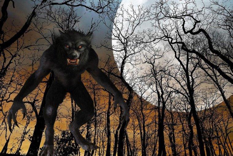 ¿Qué son los hombres lobo? 7 curiosidades sobre estos seres mágicos
