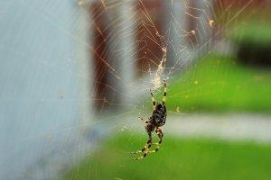 ¿Qué significa soñar con arañas? Descubre sus mensajes en nuestro diccionario de sueños