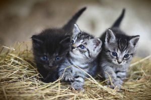 ¿Qué significa soñar con gatos? Descubre sus mensajes en nuestro diccionario de sueños