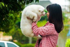 ¿Qué significa soñar con perros? Descubre sus mensajes en nuestro diccionario de sueños
