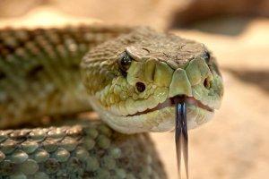 ¿Qué significa soñar con serpientes? Descubre sus mensajes en nuestro diccionario de sueños