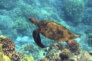 ¿Qué significa soñar con tortugas? Descubre sus mensajes en nuestro diccionario de sueños