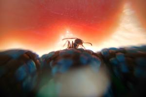 Soñar con hormigas es sinónimo de éxito a trvés del esfuerzo y la constancia