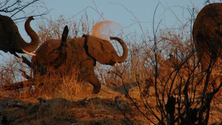 Botsuana es el mejor lugar para viajar según tu signo del zodiaco, Capricornio