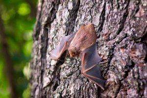 ¿Qué significa soñar con murciélagos? Descubre sus mensajes en nuestro diccionario de sueños