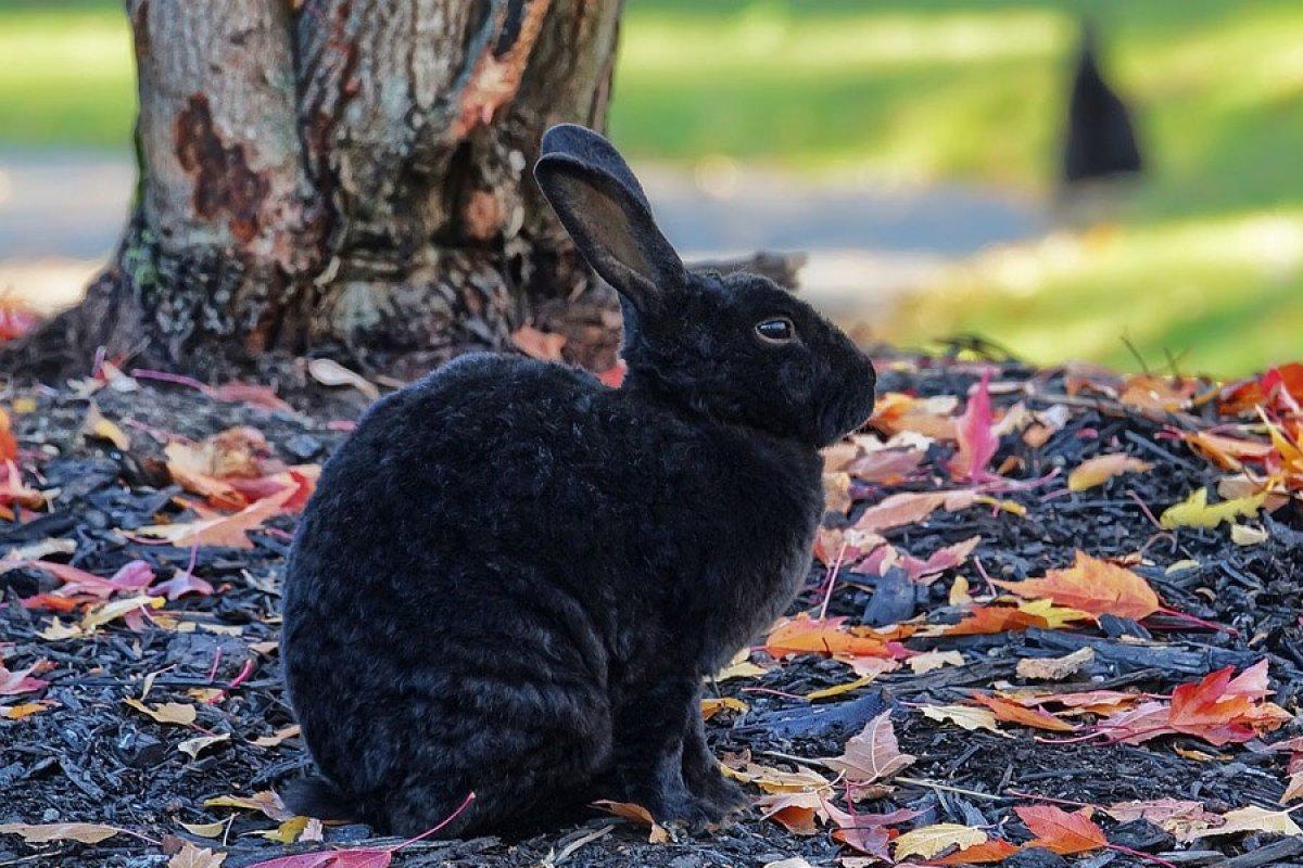 Qué Significa Soñar Con Conejos Descubre Su Significado En Nuestro