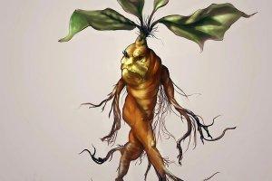 Mandrágora: la alquimia de la planta homúnculo