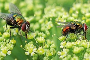 ¿Qué significa soñar con moscas? Descubre sus mensajes en nuestro diccionario de sueños