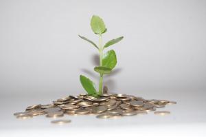Planta del dinero o planta de la abundancia: cuidados y curiosidades sobre esta planta mágica