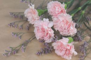 Propiedades del clavel, la planta mágica de la fuerza
