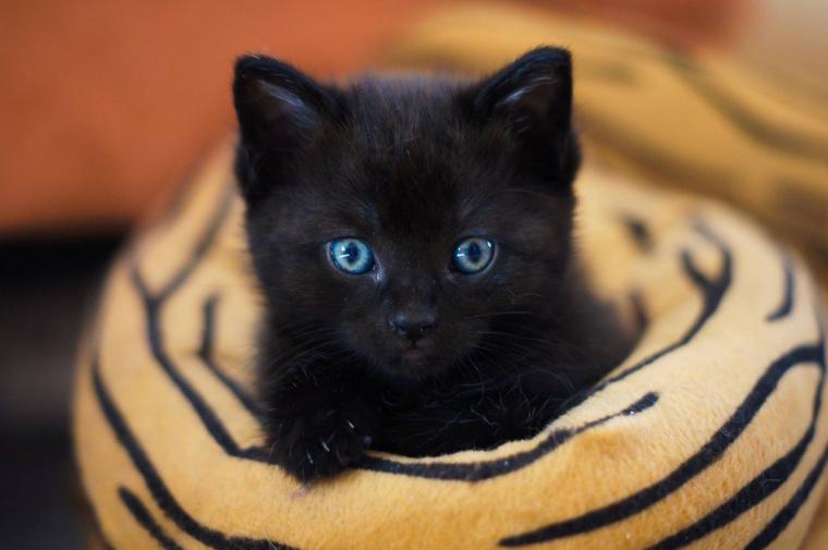 Los gatos tienen una gran sensibilidad