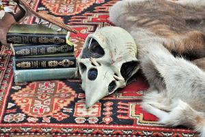 Las brujas de Salem: la historia real de los juicios que inspiró películas y libros