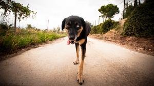 Els gossos pateixen molta calor durant l'estiu.
