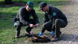 Imatge d'uns agents rurals treballant