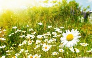 Arriba la primavera astronòmica