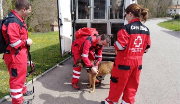 Gossos de la Creu Roja en el dispositiu de recerca.