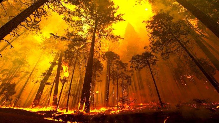 Els petards i les fogueres de Sant Joan són els causants de diversos incendis cada any