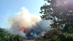Imatge de l'incendi forestal.