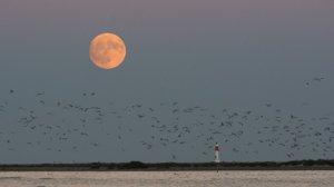 La lluna plena del mes d'octubre arriba aquest dimecres